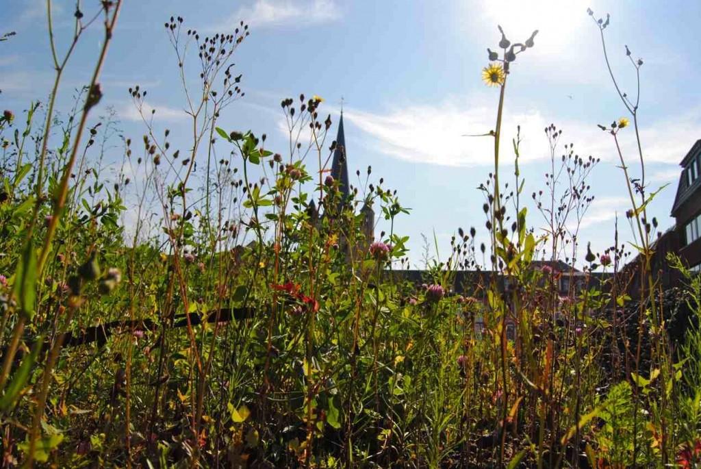 Blumenwiese Guidelplatz