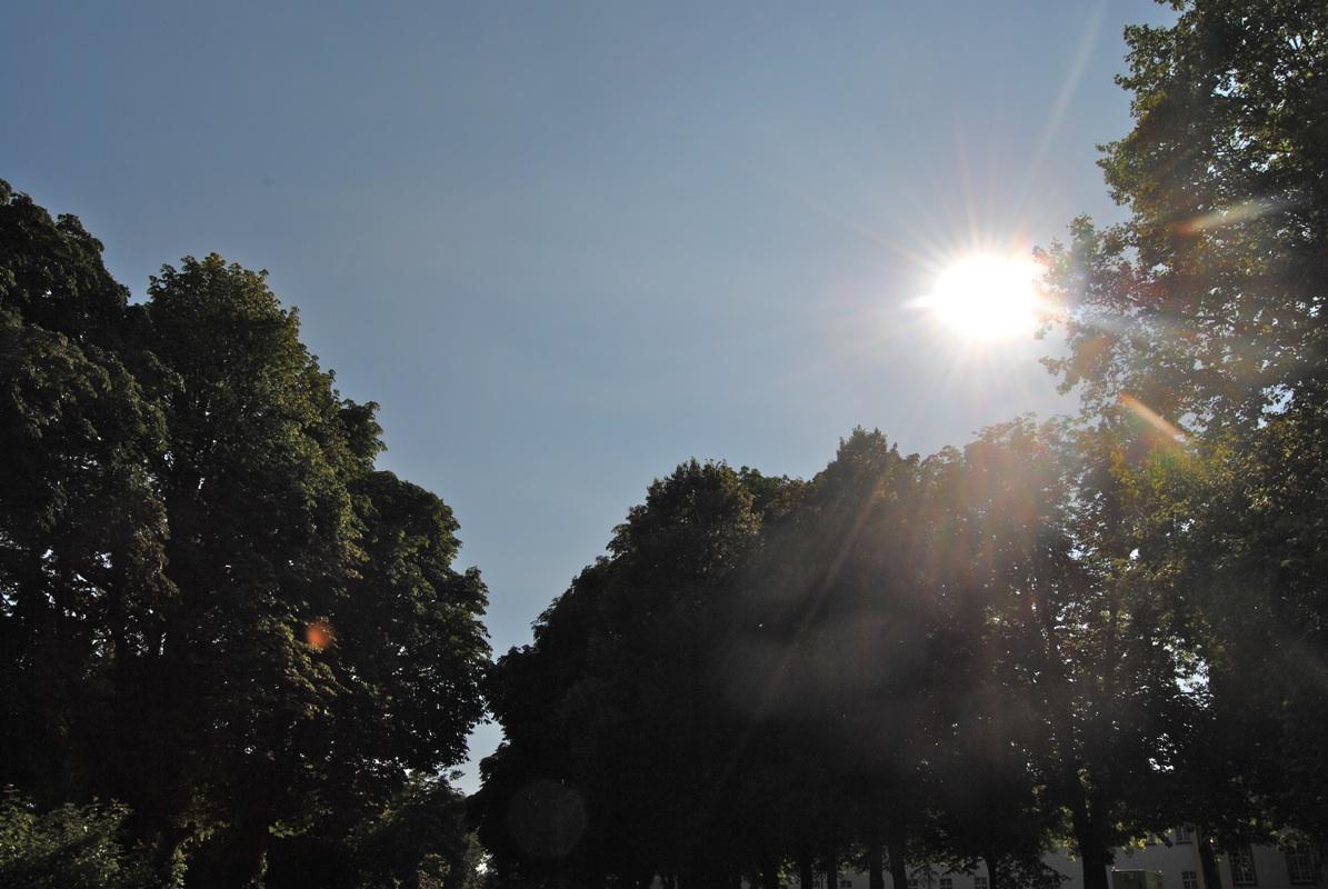 Brauweiler Schatten